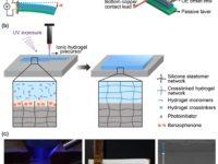 Los invertebrados inspiran los primeros materiales activos impresos en 3-D para robots